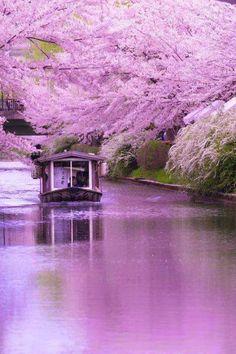 maravilhoso Japão!!!