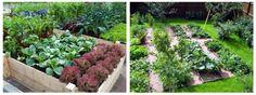 Liečivé rastliny zo záhrady