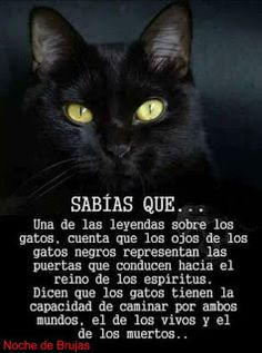 Amor a kos gatos Crazy Cat Lady, Crazy Cats, Short Horror Stories, Curious Facts, All About Cats, Beautiful Cats, True Facts, Cool Words, Animals And Pets