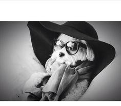 Everyone loves a fashionista. Most Fab Dog Ever. | @samilarose