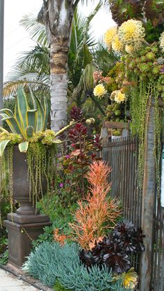 tropical garden Love this combo, I think thats quot;sticks on firequot;string of pearlsquot; - both are on my list of favorite succulents. Xeriscape, Garden Landscape Design, Planting Flowers, Plants, Succulents, Succulents Garden, Low Water Gardening, Outdoor Gardens, Succulent Landscape Design