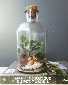 Terrarium en bouteille par lecoinjardin.fr Terrariums, Snow Globes, Caribbean, Lily, Rose, Nature, Decor, Gardens, Bottle