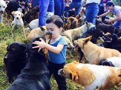 Keşke Her Şehirde Olsa Diyeceğiniz Köpeklerin Yeryüzündeki Cenneti: Kimsesiz Köpekler Diyarı