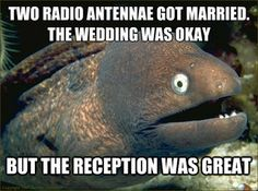 BAD JOKE EEL MEMES...pretty much my favorite thing ever.  I love lame jokes so much lol