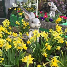 Hop on in for Easter colour this weekend! We'll be open tomorrow (Good Friday), Saturday, Sunday & Monday. Lots of mixed gardens & mixed bouquets are ready-to-go! Easter Colors, Easter Weekend, Spring Blooms, Good Friday, Spring Garden, Bouquets, Sunday, Gardens, Colour