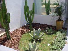 Resultado de imagem para jardim com cactos