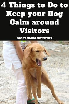 4 Things to Do to Keep your Dog Calm around Visitors - Dog Obedience Training Tips - Dogs Brain Training, Dog Training Tips, Potty Training, Easiest Dogs To Train, Dog Training Techniques, Dog Care Tips, Pet Care, Pet Tips, Dog Behavior