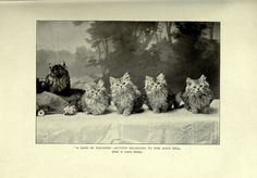 File:The book of the cat BHL23996347.jpg