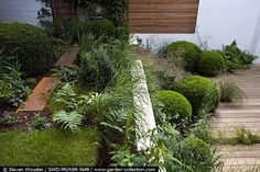 Abingdon garden designed by Sarah Price - A contemporary city garden on two levels with wooden deck, corten steps, topiary box and foliage plants. Photo by by Steven Wooster via The Garden Collection.