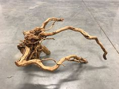 AIL03 Redmoor Wood -- driftwood shrimp moss discus manzanita spiderwood spider  #redmoorspiderwood