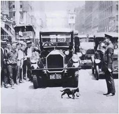"""""""July 1925, New York City: A policeman stops traffic so that a mother cat, carrying her kitten, can cross a busy street"""""""