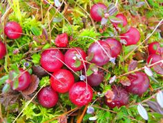 Finland Food, Medicinal Plants, Science And Nature, Deli, Food Photography, Berries, Stuffed Mushrooms, Herbs, Autumn