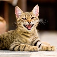 10 Sounds That Cats Make -- and What They Mean -- Cats have about 100 vocalizations, which they mix and match to talk to us because we can't read their exquisitely expressive body language.