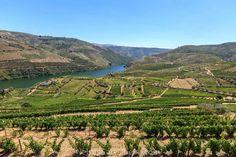 O que deve ter em conta numa viagem ao Douro | SAPO Viagens