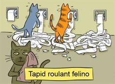 La palestra dei gatti! :)