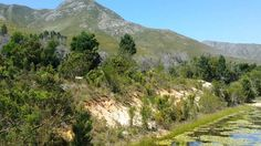 prime located land for sale between Hermanus and Stanford 0834147465 Farm Sales, Flora And Fauna, Land For Sale, Real Estate, San, River, Outdoor, Beautiful, Outdoors
