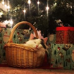 Meowy Christmas to all from Patches
