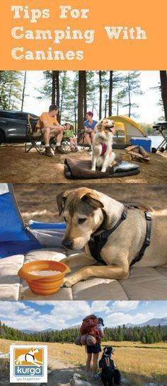 For those who love to bring their dogs everywhere with them, camping is the perfect summertime getaway! With endless options for adventure - hiking, swimming, stand up paddle boarding, trail running – camping has a lot to offer for dog and owner, alike. Before planning your camping vacation with your pup this summer, check out our tips for a safe and enjoyable trip with your pup.