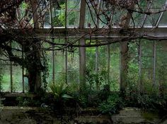 I love old neglected garden spaces