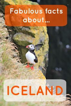 45 crazy facts about Iceland