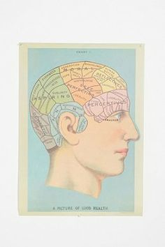 The Phrenology head poster I had in college in my dorm!!  I loved him! Phrenology Head Poster Urban Outfitters