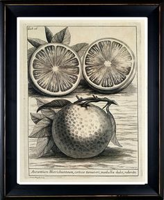 Antique Botanical Art Print Fruit Blood Orange Illustration Copper Engraving Book Plate Michelangelo Tilli Italian 1723