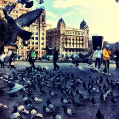Much to see when walking in Barcelona! Don't miss the pigeon parties in Plaza Catalunya and the beautiful architecture of the El Corte Inglés store if you're looking for a few things to do in the same place.
