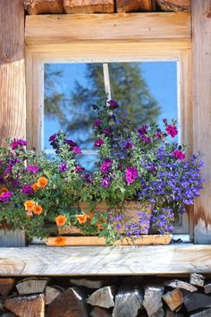 Free stock photo of wood, flowers, wall, house