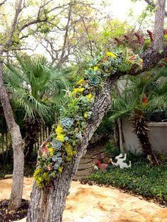 Vertical Garden  Abbey McKenna Succulent Designs