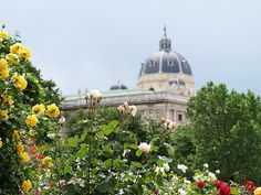 View of Hofburg palace from rose garden - Vienna