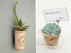 potted succulents in old silver - Google Search