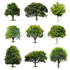 colección de árboles — Imagen de stock #7393609