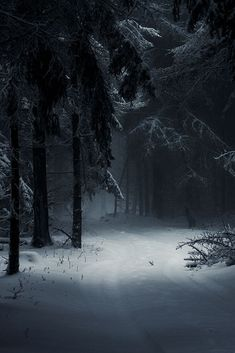 New Landscape Photography Woods Winter Scenes Ideas Winter Photography, Landscape Photography, Nature Photography, Mysterious Photography, Moonlight Photography, Monochrome Photography, Beautiful World, Beautiful Places, Beautiful Forest