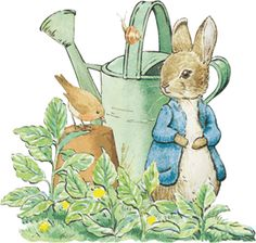 Peter Rabbit-Peter Rabbit is a fictional anthropomorphic character in various children's stories by Beatrix Potter. He first appeared in The Tale of Peter Rabbit in and subsequently in five more books between 1904 and Art And Illustration, Rabbit Illustration, Peter Rabbit Birthday, Peter Rabbit Party, Coelho Peter, Rabbit Clipart, Beatrix Potter Illustrations, Image Deco, Beatrice Potter