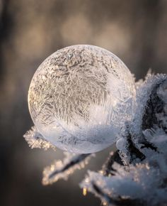"lyatheo: "" spectatia_ ~ A frozen soap bubble from last winter """
