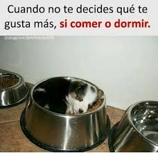 Memes humor amor 18 ideas for 2019 Funny Spanish Memes, Funny Jokes, New Memes, Memes Humor, Single Humor, Minions Quotes, Relationship Memes, Happy Paw, Pets