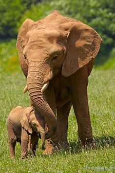 Love Between Mother Elephant and Her Baby More