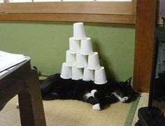 Funny pet picture of cups on a sleeping cat. A pet humor photo and kitty comedy pic with one of the funniest domestic animals. Funny Cats, Funny Animals, Cute Animals, Funny Animal Photos, Funny Photos, Pet Pictures, Crazy Cat Lady, Crazy Cats, Stupid Cat