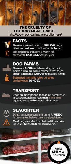 The Cruelty Of The Dog Meat Trade http://www.worldanimalprotection.org/