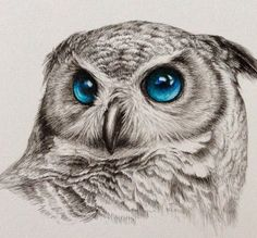 Owls , blue , eyes , pencils https://scontent.fmel1-1.fna.fbcdn.net/hphotos-xtf1/v/t1.0-9/12308468_10153843886514903_7322478749495675019_n.png?oh=585d6de8421638aa7040085dcb012e35&oe=56E0655D