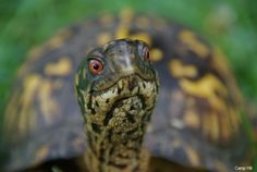 Happy World Turtle Day! It's the perfect time to learn how to make your backyard turtle friendly!