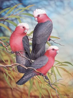 'Australian Galahs' by Lyn Cooke Birds Painting, Australian Artists, Animal Art, Australian Art, Wildlife Art, Art, Colorful Birds, Bird Illustration, Australian Native Animals