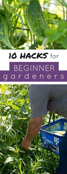 The best gardening tips for beginners.