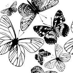 Vector seamless wallpaper pattern with butterflies for design — Ilustración de stock Butterfly Outline, Retro, Pattern Wallpaper, Plant Leaves, Silhouette, Illustration, Beautiful, Butterflies, Insects