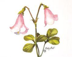 Prairie Rose Pink Wildflower Print by judithbelloriginals