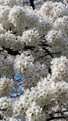 Flowery spring
