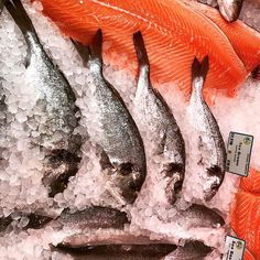 The weather may have been challenging but huge praise to all the fishermen who brave it to keep fishmongers supplied. This fish spied squeaky fresh @crossofyork yesterday. I bought line-caught haddock for last nights risotto and it was so good. . . . . . . . . .#freshfish #fishmongers #healthyfood #freshfoid #eatmorefish #smokedhaddock #risotto #loveyourfishmonger #foodwriter #recipedeveloper #shamblesmarket #seafish #yorkshire #pinthis