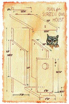 Screech Owl Box plans from Audubon socienty. Apparently, they don't mind living in the city.