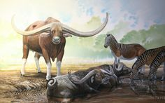End of the Megafauna - Giant Buffalo, Cape Quagga Prehistoric Wildlife, Prehistoric World, Prehistoric Creatures, Wildlife Art, Stone Age Animals, Buffalo Animal, Beast Creature, Historia Natural, Spinosaurus