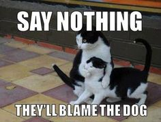 cats blame the dog, where is the dog ?